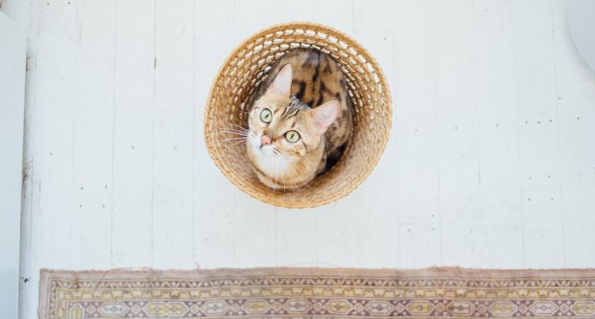 cat niche 2_cropped